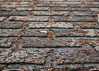 roof shingles decay